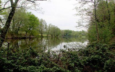Réouverture de la pêche à l'étang de la Verne