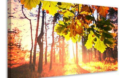 La bib vous invite à photographier l'automne